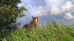Horse on pasture Stock Footage