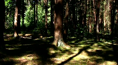Escape through mysterious forest - stock footage