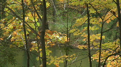 Fall Trees47 Stock Footage