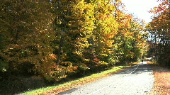 Fall Trees13 Stock Footage