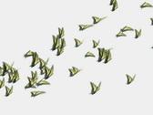 Swallowtail butterflies flock (PAL) Stock Footage