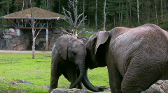Elephant And Calf 2 Stock Footage