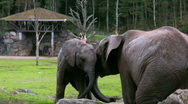 Stock Video Footage of Elephant And Calf 2
