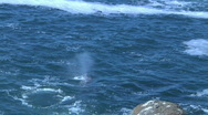 Stock Video Footage of Two Whales Near Rocky Shore