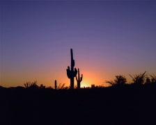 Saguaro Cactus Sunset PAL Stock Footage