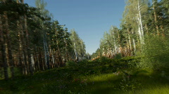 Flight through the forest Stock Footage