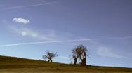 Barren Landscape, Dead Trees Time Lapse, Arid, Vapour Trails Stock Footage