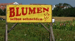 Germany Self-service flowers cutting for sale - stock footage