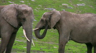 Stock Video Footage of Two Elephants 2