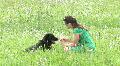 Girl training her dog Footage