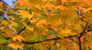 Autumn leaves CU Stock Footage