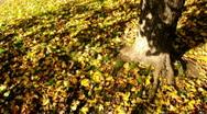 Tree & Ground Stock Footage