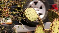 Desert Off-roading 1149 Stock Footage