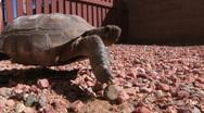 Pet Turtle 1139 Stock Footage