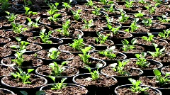 Gardener seedling in greenhouse garden - stock footage