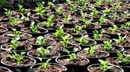 Gardener seedling in greenhouse garden Stock Footage