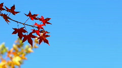 Stock Video Footage of Autumn leaves. Place for Copyspace