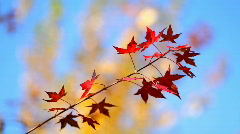 Autumn leaves. Place for Copyspace Stock Footage