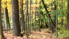 Autumn forest path yellow Stock Footage