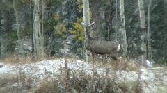 Deer walking in the snow Stock Footage