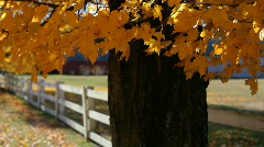 Leaves Fence 2 - stock footage