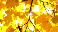 Moving autumn leaves Stock Footage
