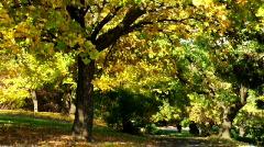 Autumn tree - stock footage