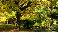 Stock Video Footage of Autumn tree