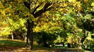 Autumn tree Stock Footage