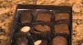 Box of chocolates 4 Footage