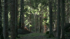 Forest with change in light Stock Footage