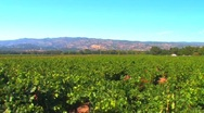 Stock Video Footage of Napa Valley Vineyard HD
