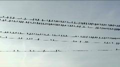 Bird Flock Games Stock Footage