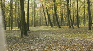 Autumn walk Stock Footage