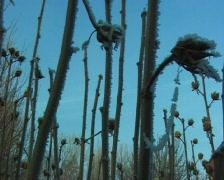 Frozen plants Stock Footage
