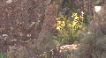 Plants In The Jemez Mountains Footage