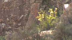 Plants In The Jemez Mountains Stock Footage