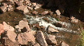 Babbling Brook In The Jemez Mountains Footage