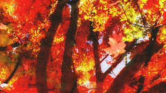 Fall Leaves Looping Background - stock footage