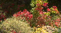 Flowers In The Jemez Mountains Footage