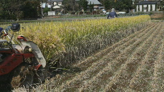 Japanese rice farmer harvesting rice field - stock footage