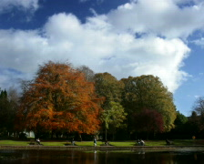 Park and autumn time lapse Stock Footage