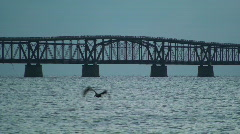 Bahia Honda Rail Bridge Center Span with Pelican Stock Footage