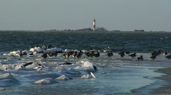 Ducks Winter Lighthouse Fehmarn Stock Footage