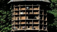 Bird-house in Baden Baden, Black forest Stock Footage