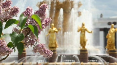 Lilac with friendship fountain on background and focus shifting to fountain Stock Footage