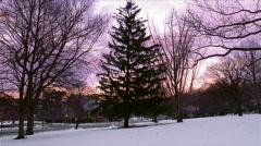 Christmas Tree at Sunset 480x270 Stock Footage