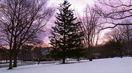 Christmas Tree at Sunset 480x270 Stock Footage