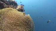 From blue water to tropical reef Stock Footage