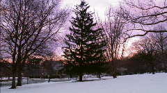 Christmas Tree at Sunset HD Stock Footage